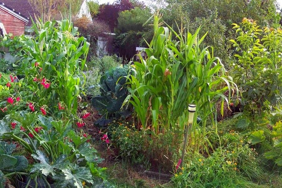 eco-weeks-organic-gardens